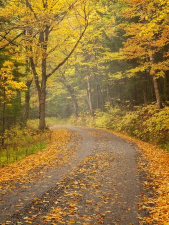 USA, New Hampshire, White Mountains, Fall color along Jefferson Notch Road