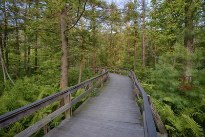 USA, New York State. The boardwalk that winds through the wetlands of Labrador Pond