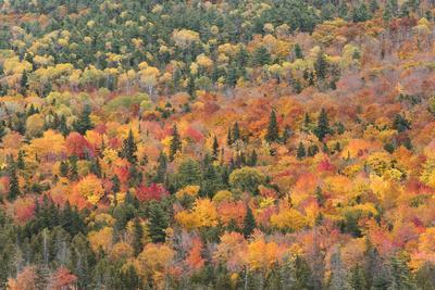 USA, Michigan. Autumn foliage in the Keweenaw Peninsula.