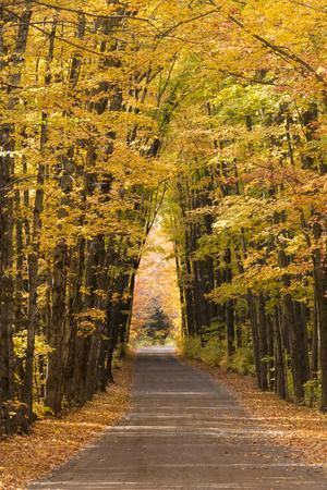 USA, Michigan. Trees lining Cathedral Road form a cathedral like shape overhead.