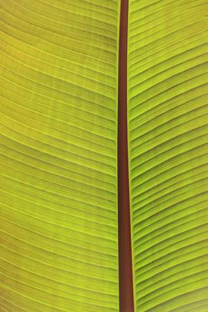 Close-up of the underside of a leaf. Portland, Oregon, USA