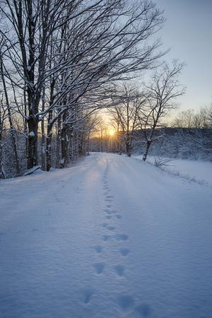 USA, New York State. Animal tracks in snow, Erie Canal.