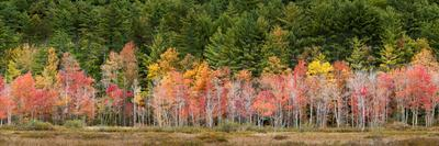 USA, New Hampshire, White Mountains, Panoramic view of maple in autumn