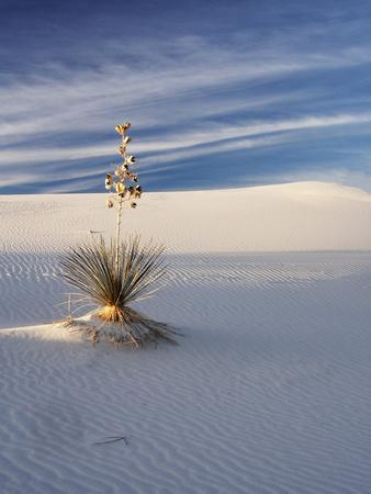USA, New Mexico, White Sands National Monument, Sand Dune Patterns and Yucca Plants