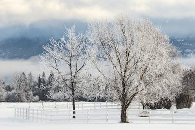 Heavy frost on trees, Kalispell, Montana
