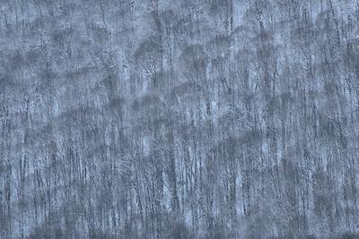 USA, New York State. Hillside of winter trees.