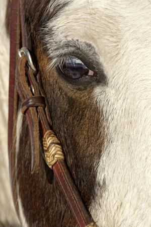 Horse close-up in winter, Kalispell, Montana.