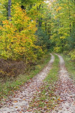 Michigan, Hiawatha National Forest, road with trees in fall color