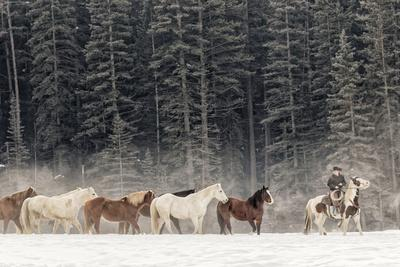 Horse roundup in winter, Kalispell, Montana.
