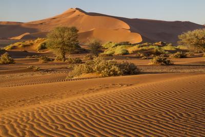 Namibia, Namib-Naukluft National Park, Sossusvlei. Scenic red dunes.