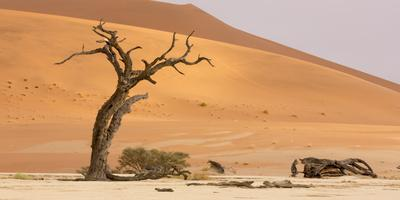 Namibia, Namib-Naukluft Park, Deadvlei. Dead tree and sand dunes.