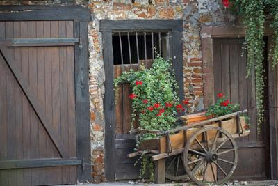 France, Alsace, Colmar. Rustic wooden wagon draped with plants.