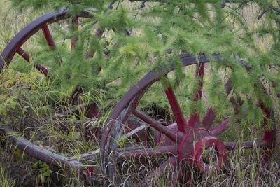 Canada, Yukon Territory. Old wagon wheels in grass.