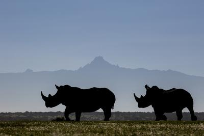 Two white rhinos silhouetted against the outline of Mount Kenya on a clear morning.