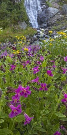 Canada, British Columbia, Selkirk Mountains. Monkeyflowers and waterfall.