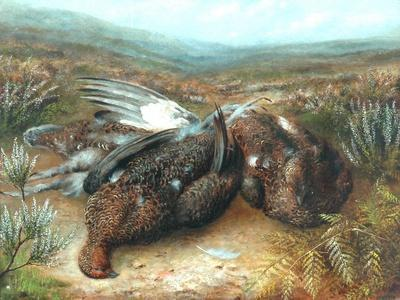 Dead Grouse in Landscape