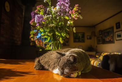 A cat taking a nap on a sunny table
