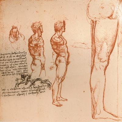 Drawings showing the movements of the human figure and warriors fighting, c1472-c1519 (1883)