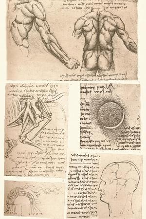 Four anatomical drawings, c1472-c1519 (1883)