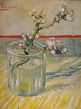 'Tige Fleurie D'Amandier', 1888