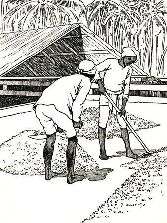 'Drying the Cocoa', 1912