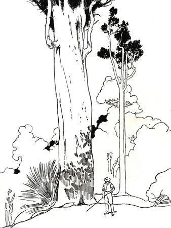 'A Kauri Tree', 1912