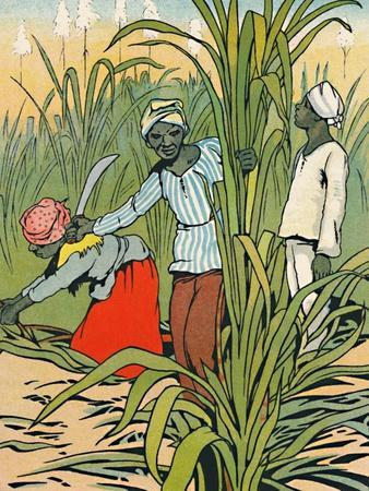 'At Work Among The Sugar-Canes', 1912