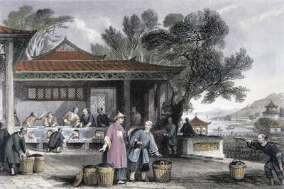 'The Culture and Preparation of Tea', China, 1843