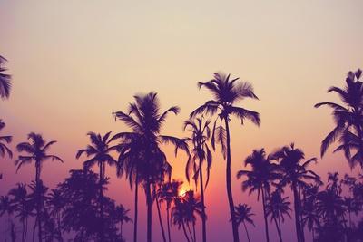 Palm Sky 1