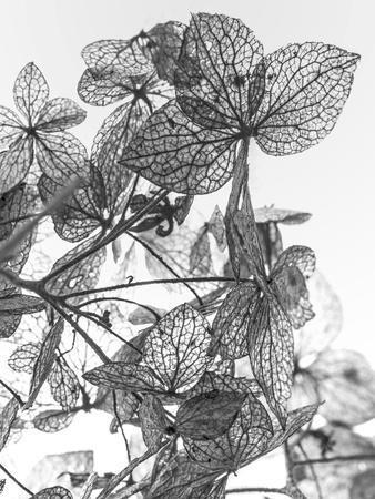 Leaf Composition