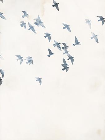 Pigeons Sky