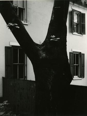 Tree and Building, 1960