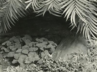 Plants, Bronx Botanical Garden, New York, 1945