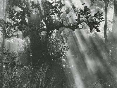 Trees, Hawaii, 1978