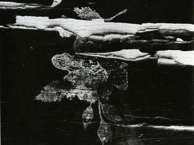 Wood, c. 1970