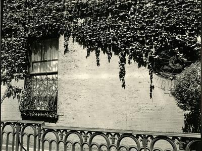 Window, Ivy On Wall, New York, 1945