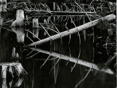Tree and Water, High Sierra, c.1970