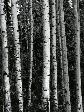 Trees, c. 1970