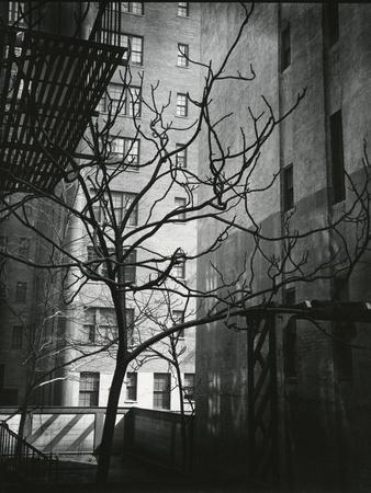 Manhattan Courtyard, New York, 1945