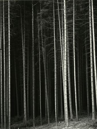 Trees, Germany, 1971