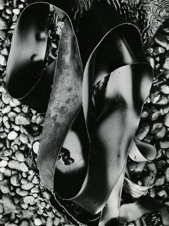 Kelp and Pebbles, Oregon, 1974