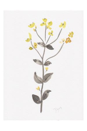 Wildflower Organics V