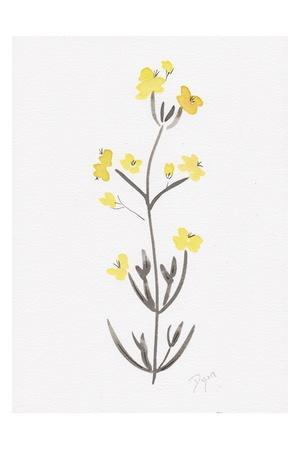 Wildflower Organics VI