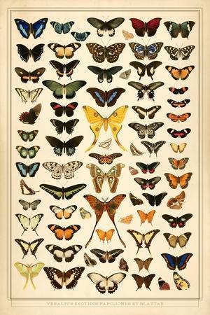 Array of Butterflies and Moths
