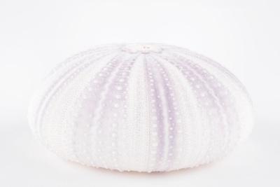 So Pure Collection - Natural Mauve Sea Urchin Shell
