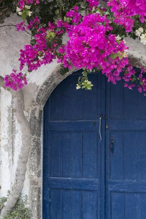 Greece, Santorini. Weathered blue door is framed by bright pink Bougainvillea blossoms.