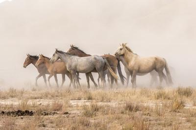 USA, Utah, Tooele County. Wild horses and dust.