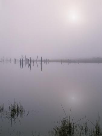 Oregon. Deschutes NF, early morning sun breaks through fog over Crane Prairie Reservoir.