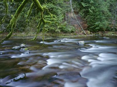 OR, Mount Hood NF. Salmon-Huckleberry Wilderness, Salmon River
