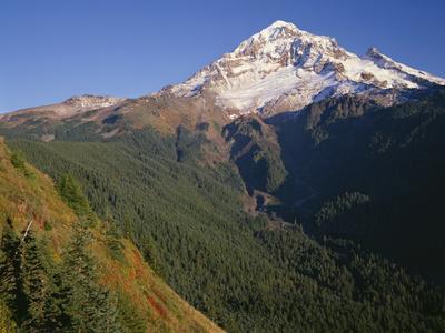 OR, Mount Hood NF. Mount Hood Wilderness, West side of Mount Hood